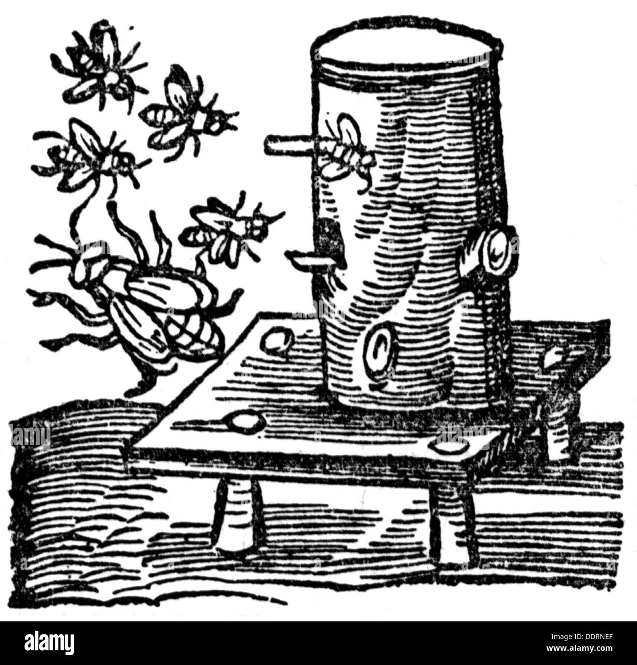 zoology / animals, insects, bee, honey bee (Apis mellifera), beekeeping, wooden beehive, woodcut, out of: Albertus Stock Photo