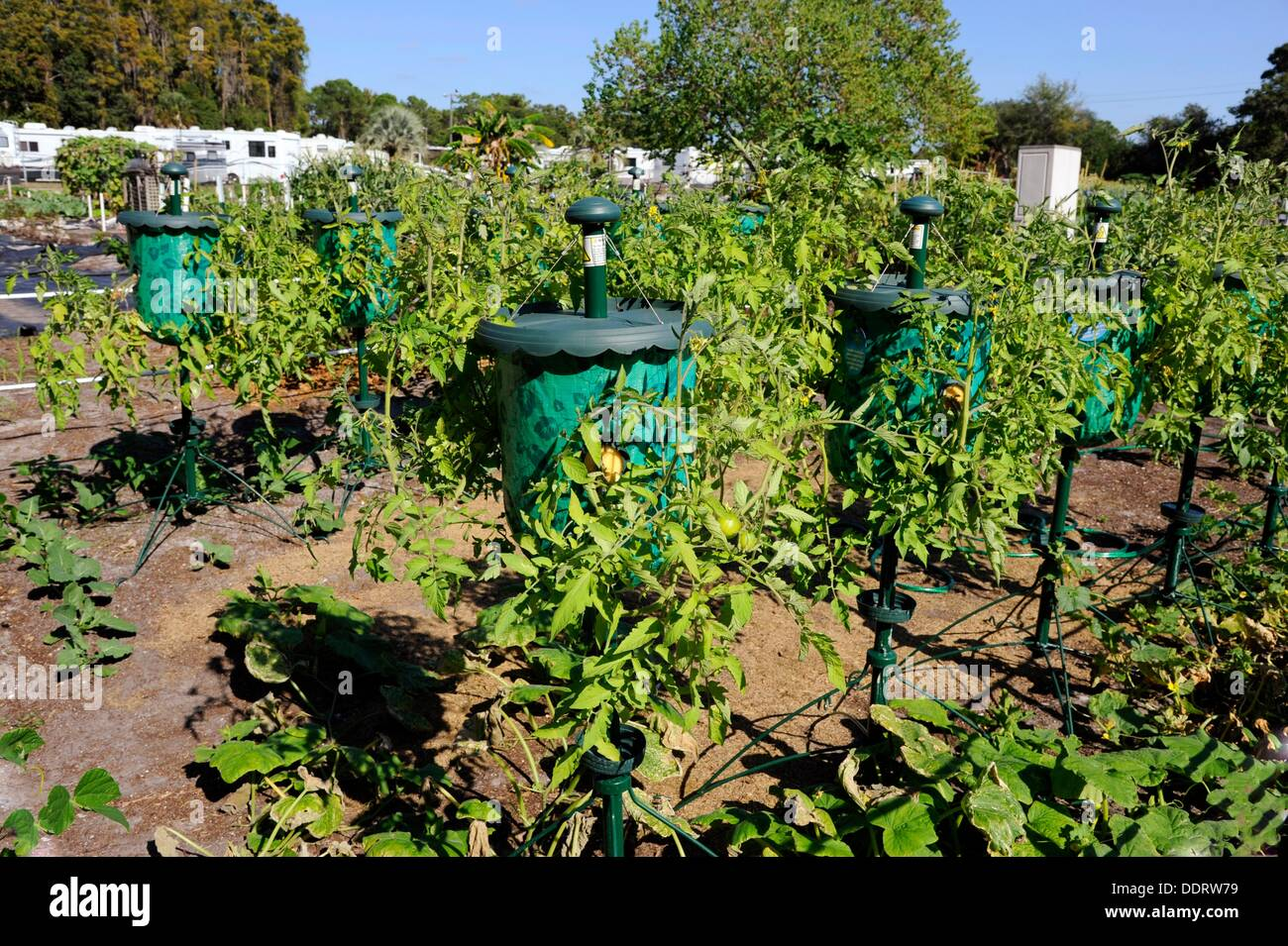 Tomato Grow Bag Container For Productive Small Home Garden Projects