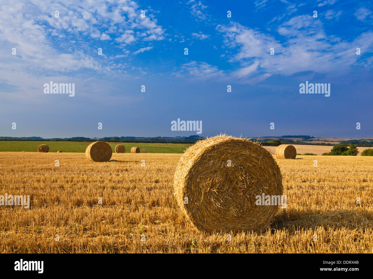 Wheat field harvested and straw bales made Lincolnshire Wolds England UK GB EU Europe - Stock Image