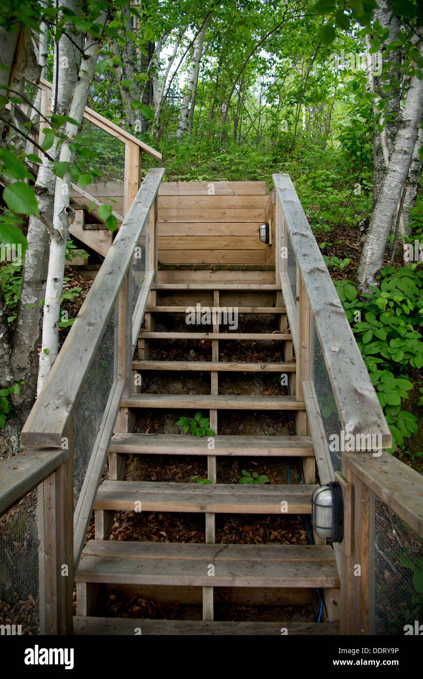 Wooden Staircase In Forest Lake Of The Woods Keewatin Ontario Stock Photo Alamy
