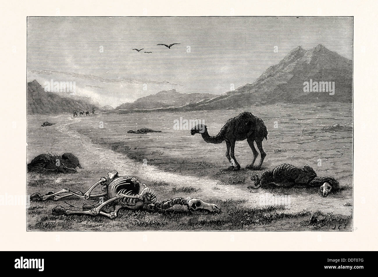 A CAMEL LEFT TO DIE, AN INCIDENT IN THE AFGHAN WAR, AFGHANISTAN - Stock Image