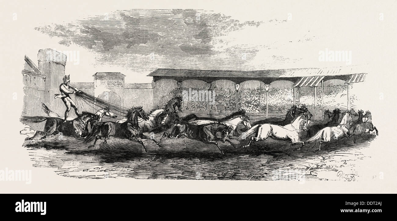 THE PARIS HIPPODROME: SEVENTEEN HORSES DRIVEN BY M. MARIN, FRANCE, 1860 engraving - Stock Image