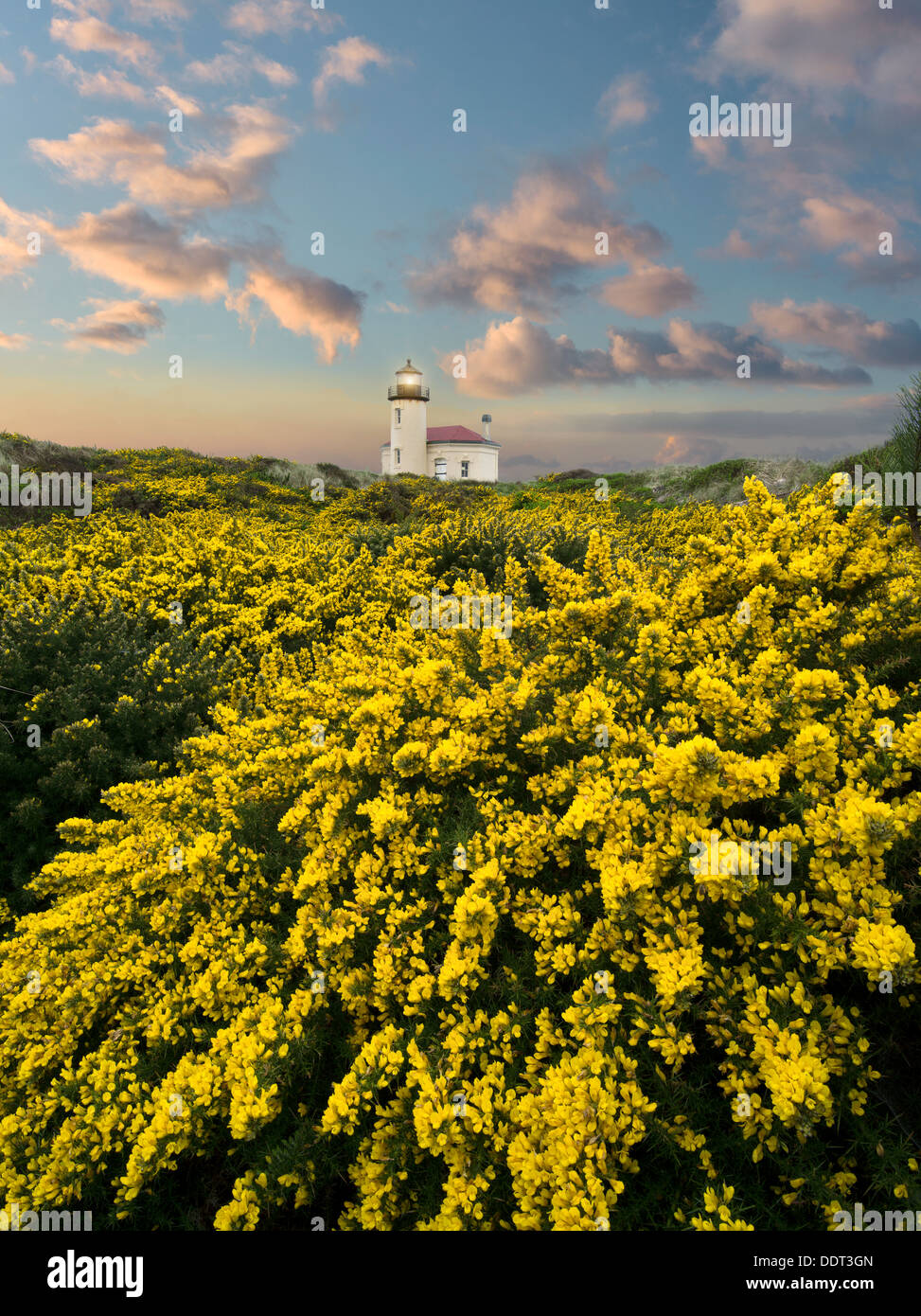 Coquile River Lighthouse with gorse. Bandon, Oregon - Stock Image