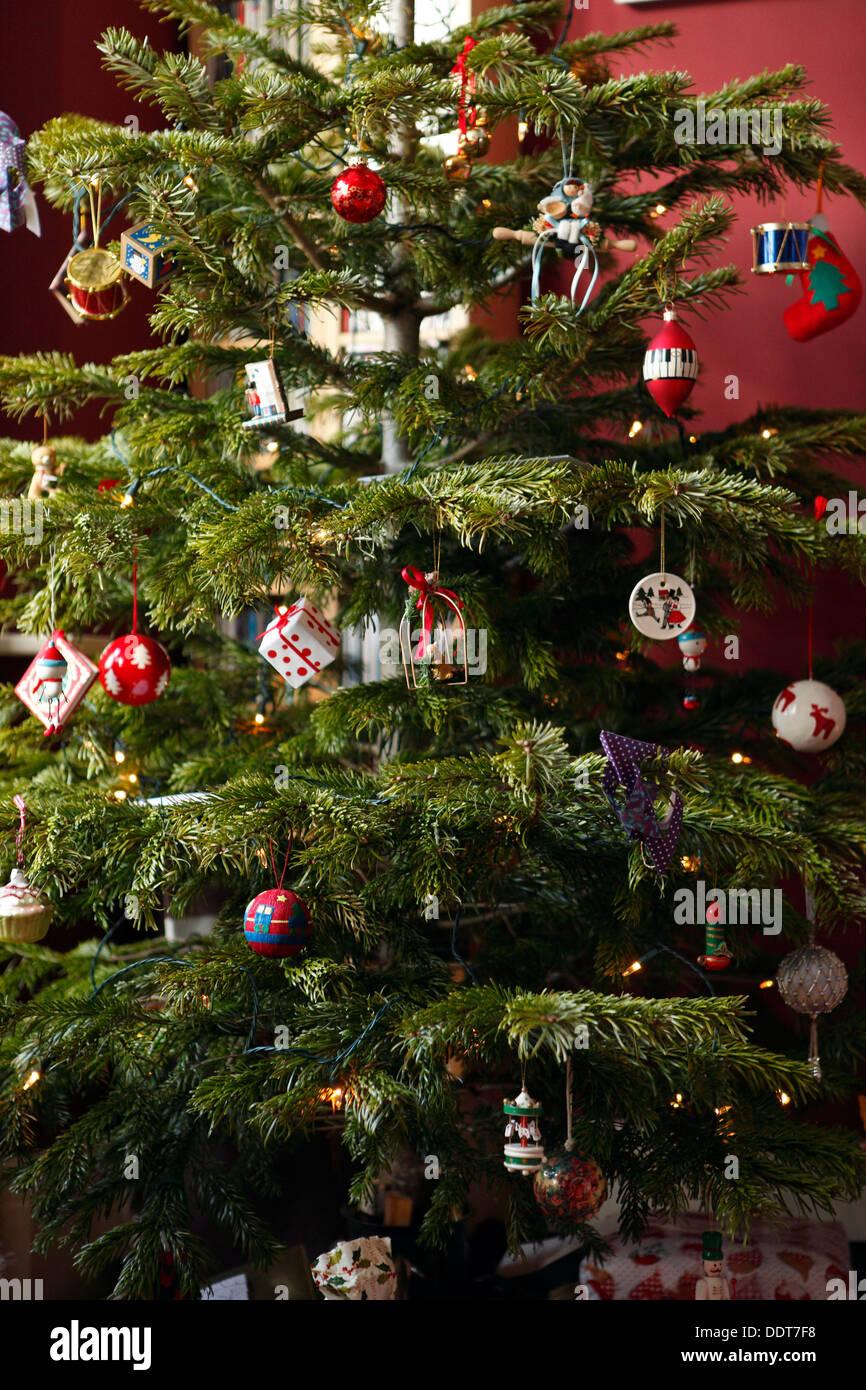 Nordmann Fir Christmas Tree Stock Photos & Nordmann Fir Christmas ...