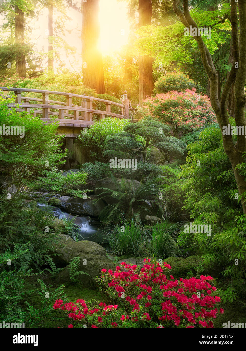 Bridge, stream and blooming Rhododendron. Portland Japanese Garden, Oregon - Stock Image