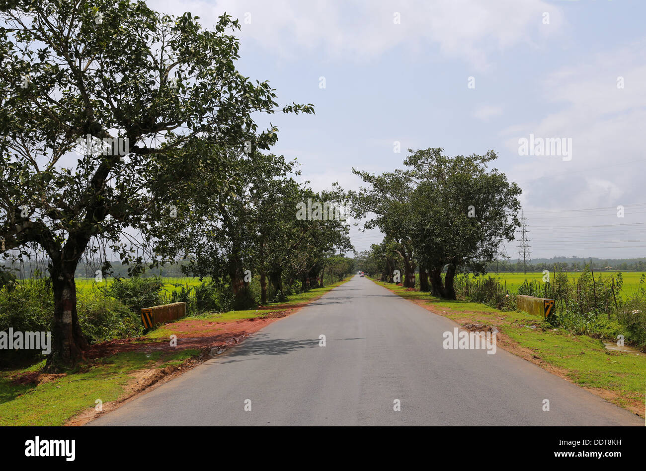 Long road with trees in Karnataka, India Stock Photo