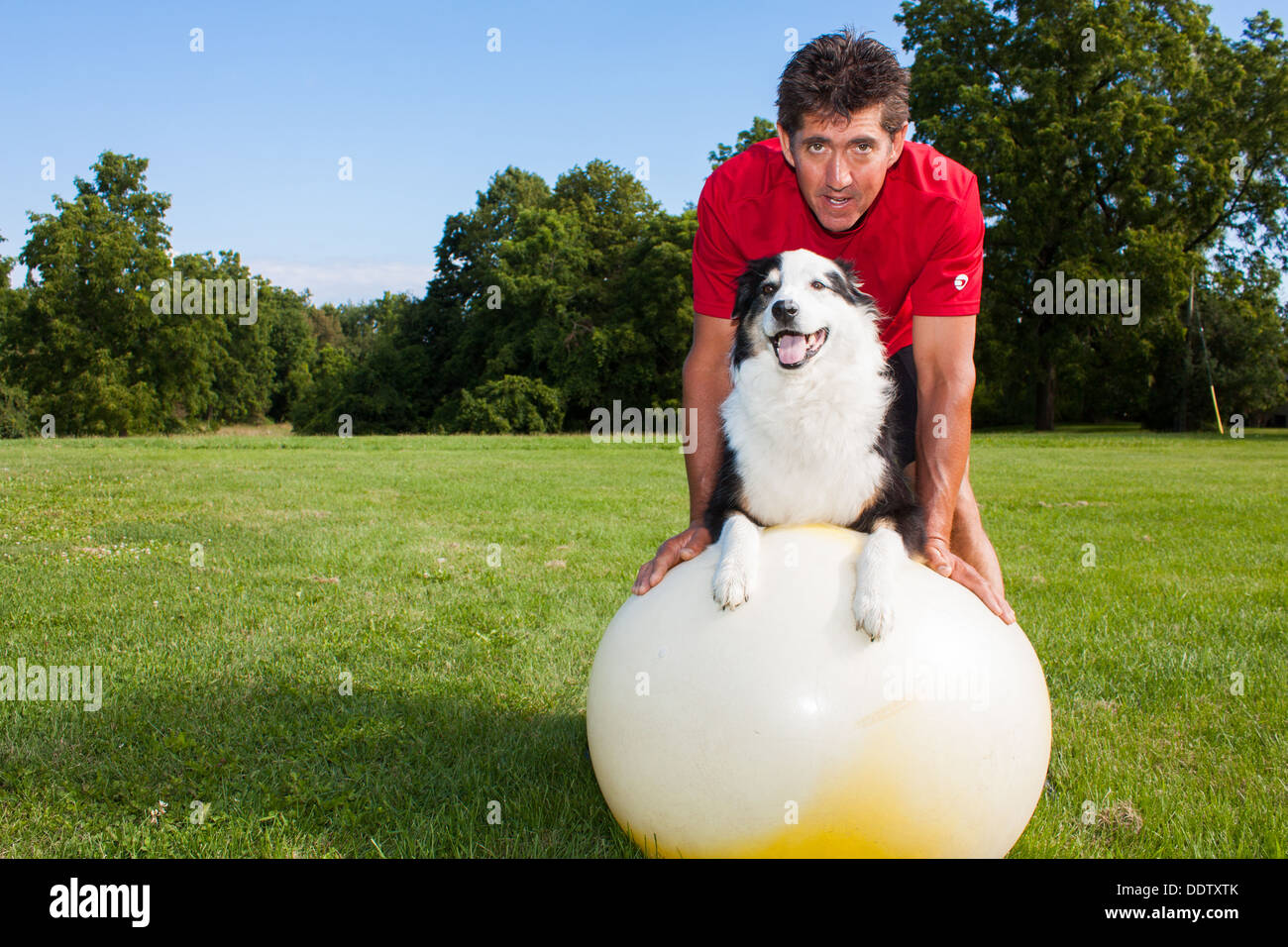 A dog trainer helping his dog exercise on a yoga ball - Stock Image