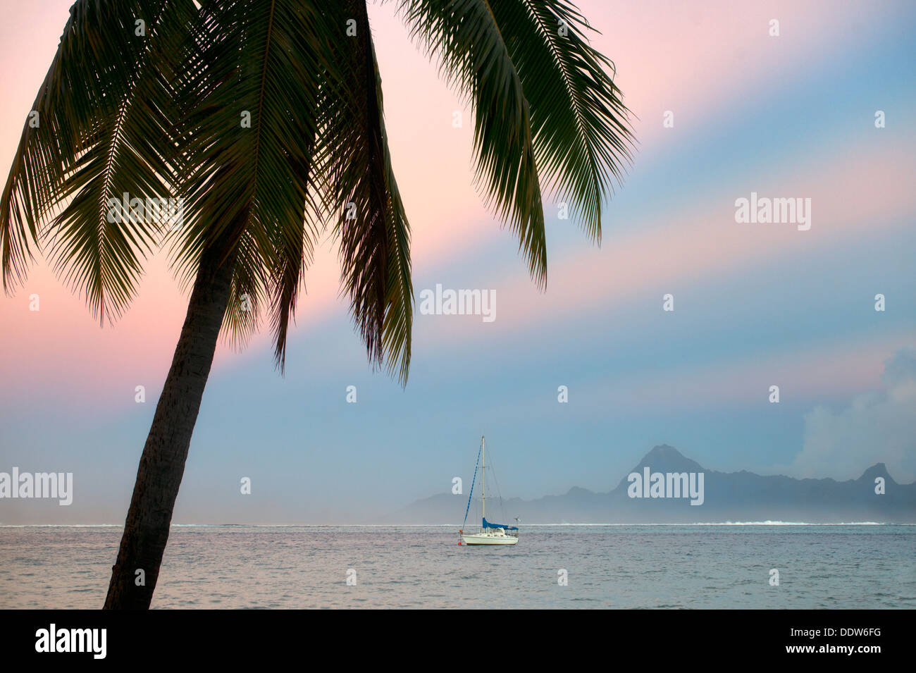 Palm tree sailboat, sunrise and the Island of Moorea. Tahiti. French Polynesia - Stock Image
