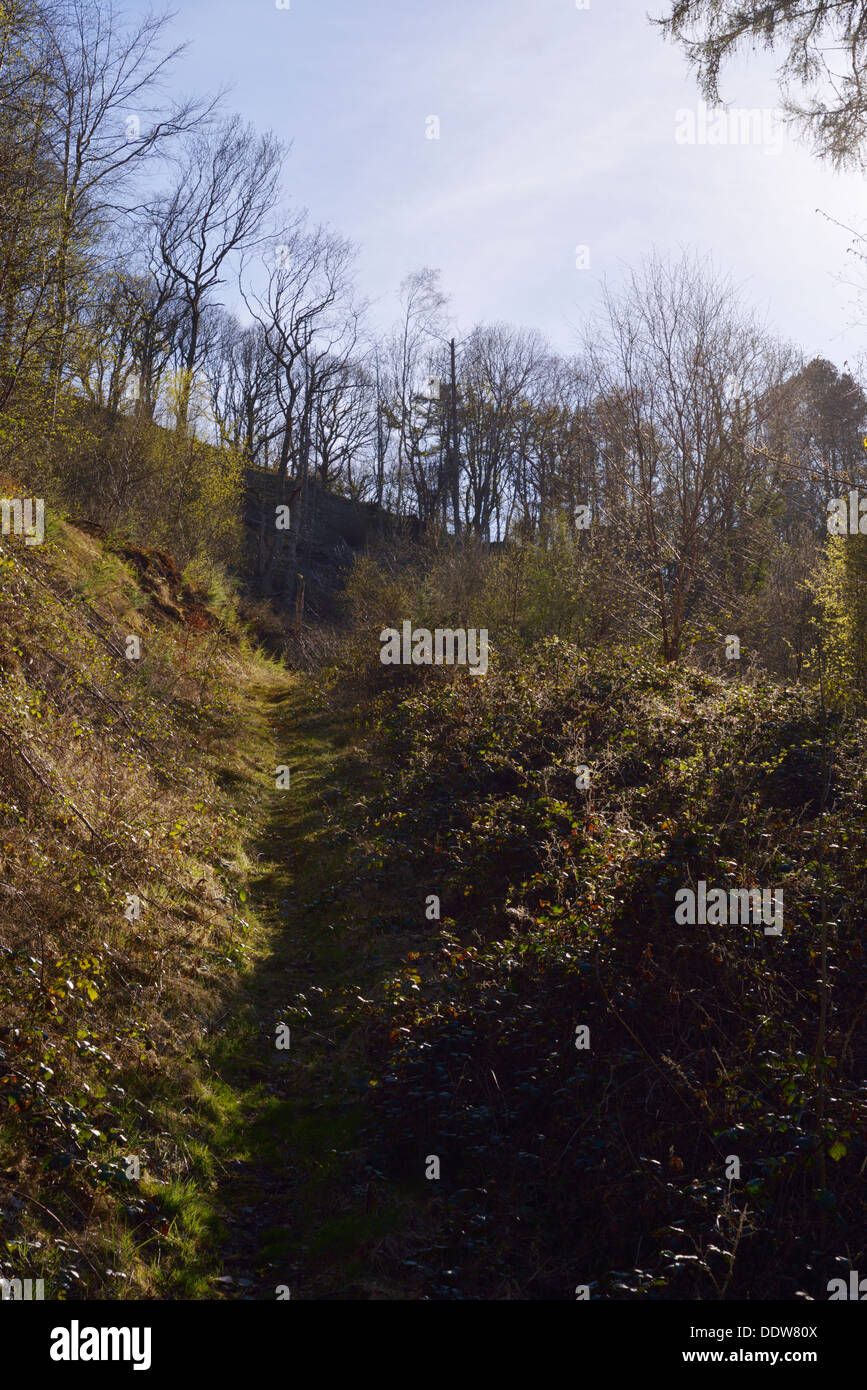 Trackway through deciduous woodland recently cleared of conifers in Spring, Tir Sisial, Wales, UK. - Stock Image