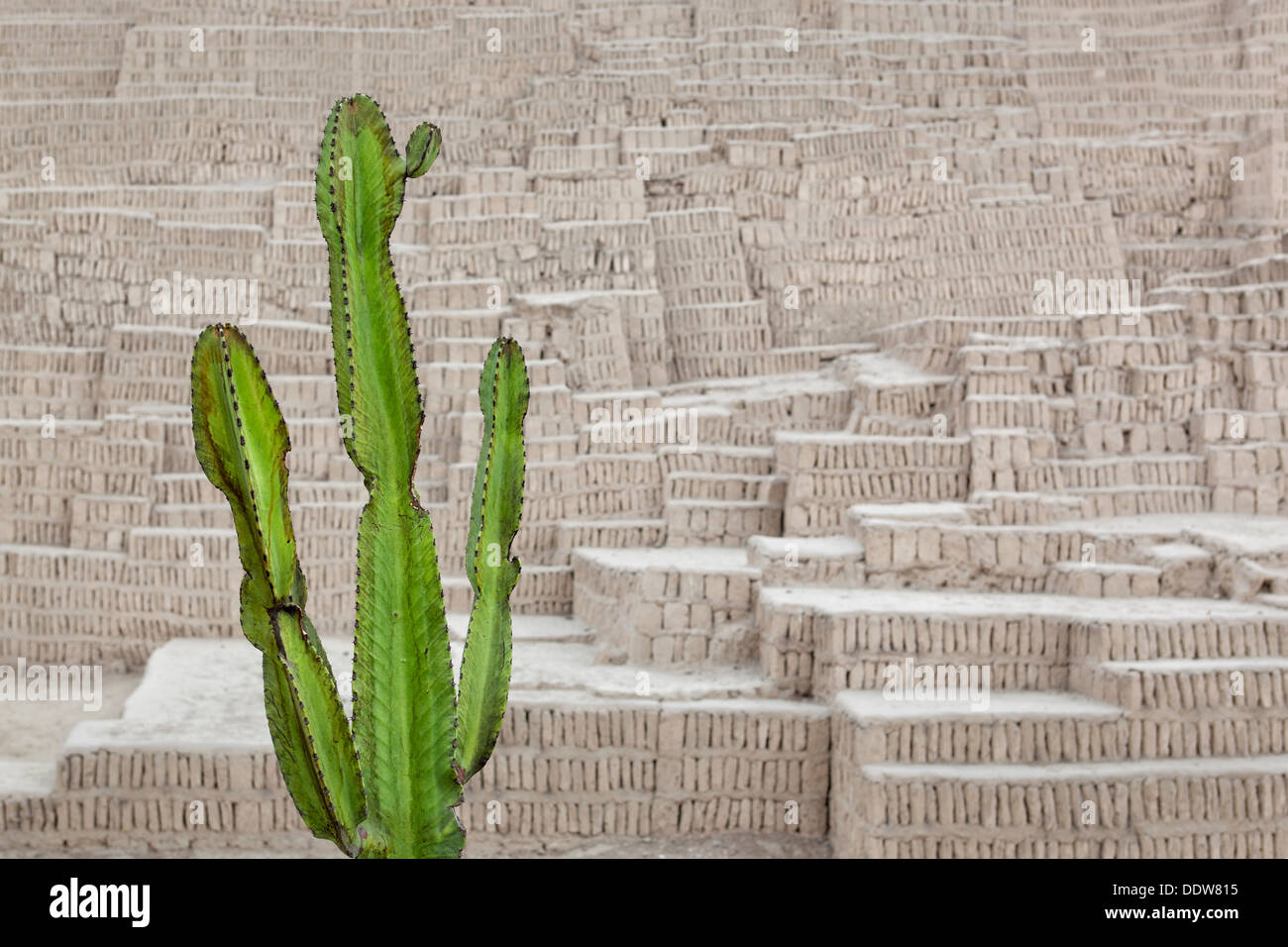 Huaca Pucllana: detail of adobe mud brick walls dating back to Lima culture of 400AD, with green candelabra euphorbia cactus in - Stock Image