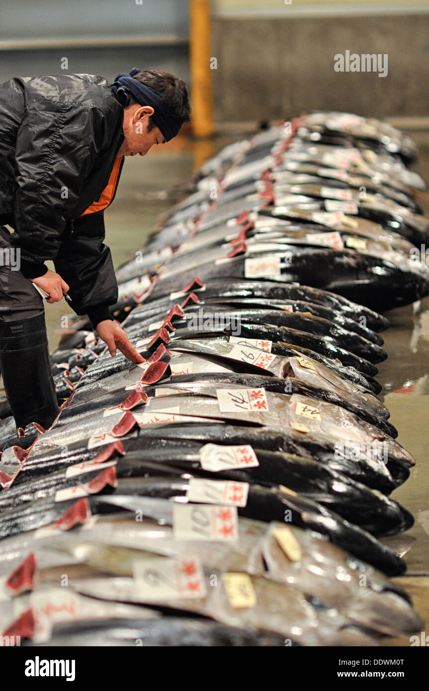 Tuna being inspected at a fish market in Osaka, Japan prior to auction. - Stock Image