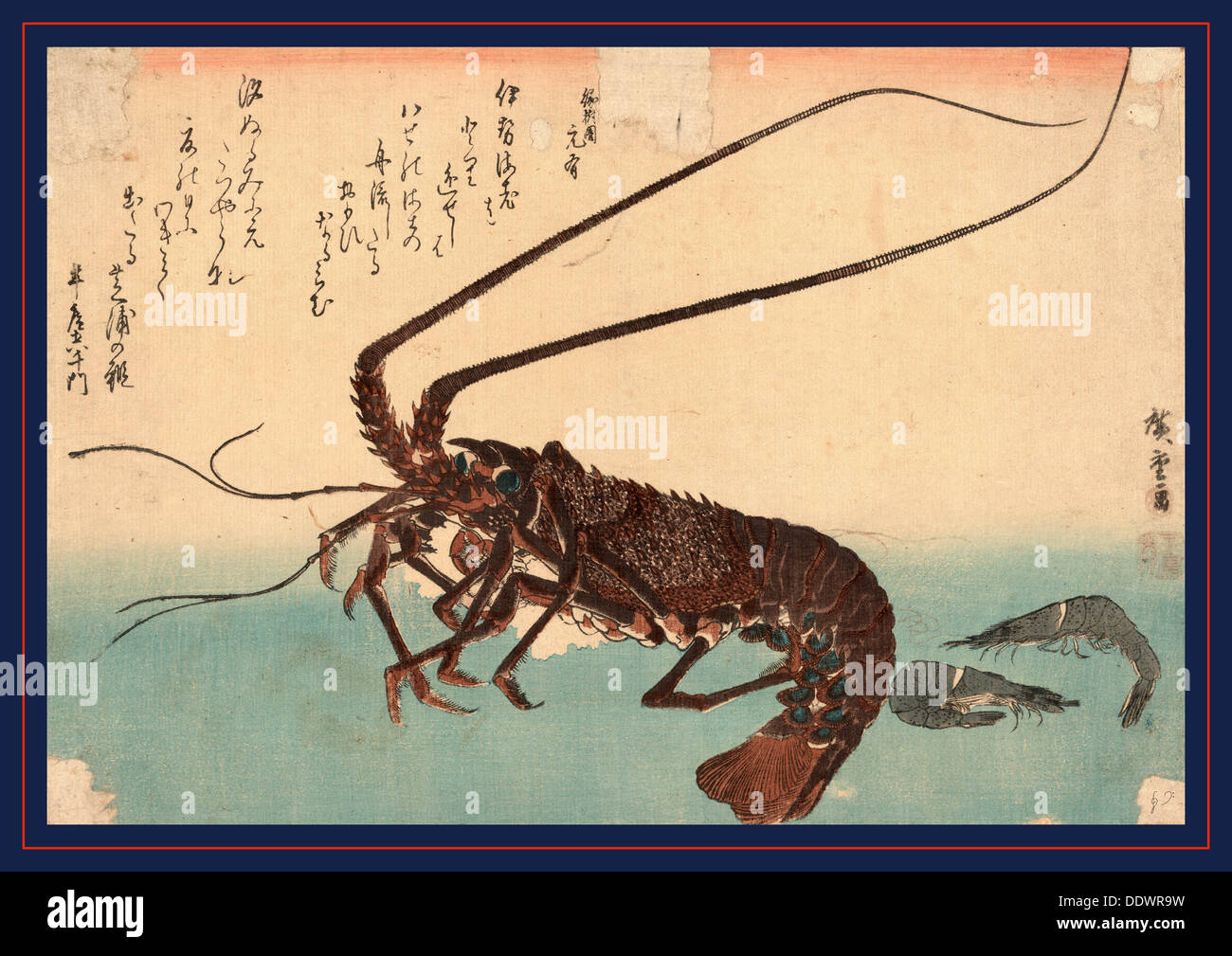 Ise ebi to shiba ebi, Shrimp and lobster. [between 1835 and 1844], 1 print : woodcut, color ; 25.3 x 37 - Stock Image