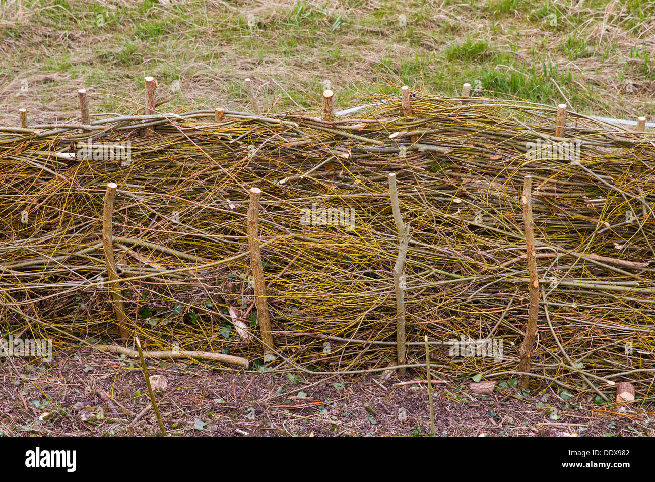 fence panels hurdles thin branches withies willow - Stock Image