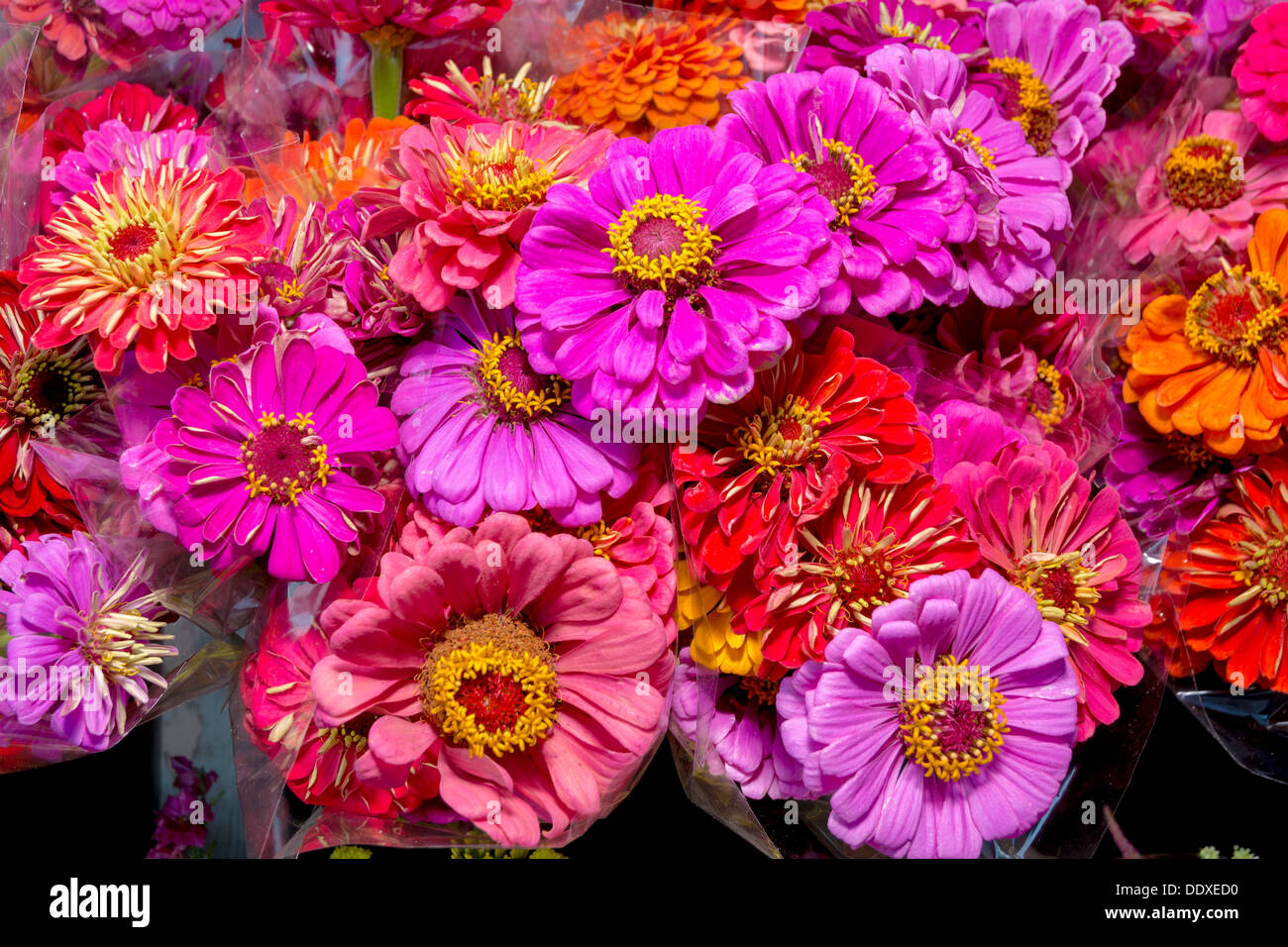 Flowers Wrapped In Cellophane For Sale Stock Photo 60203724