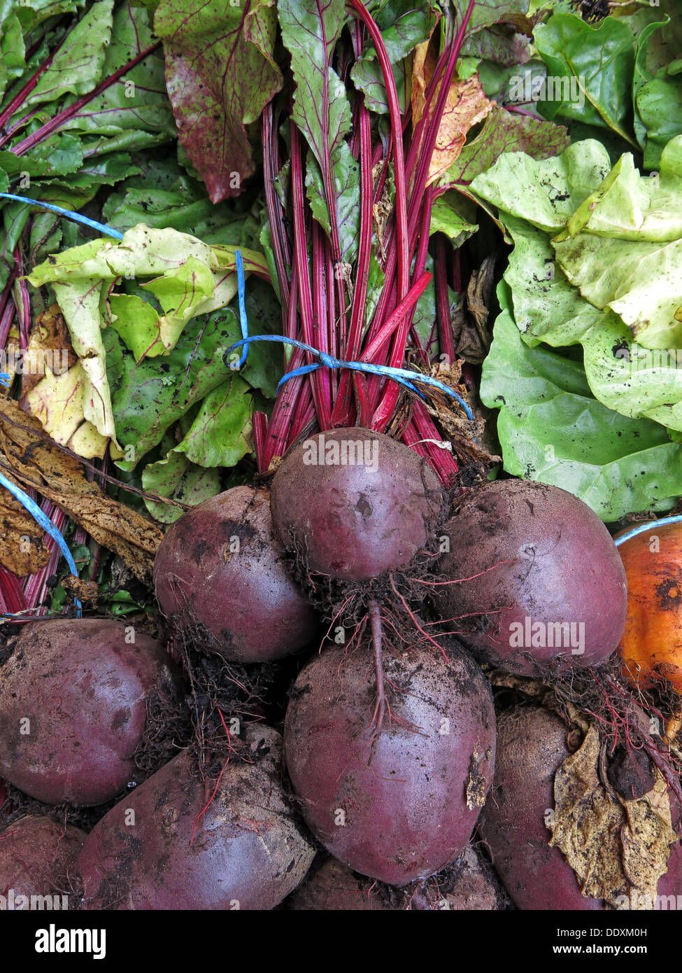 Organic red Beetroot on sale at a farmers market with stalk, Warrington - Stock Image