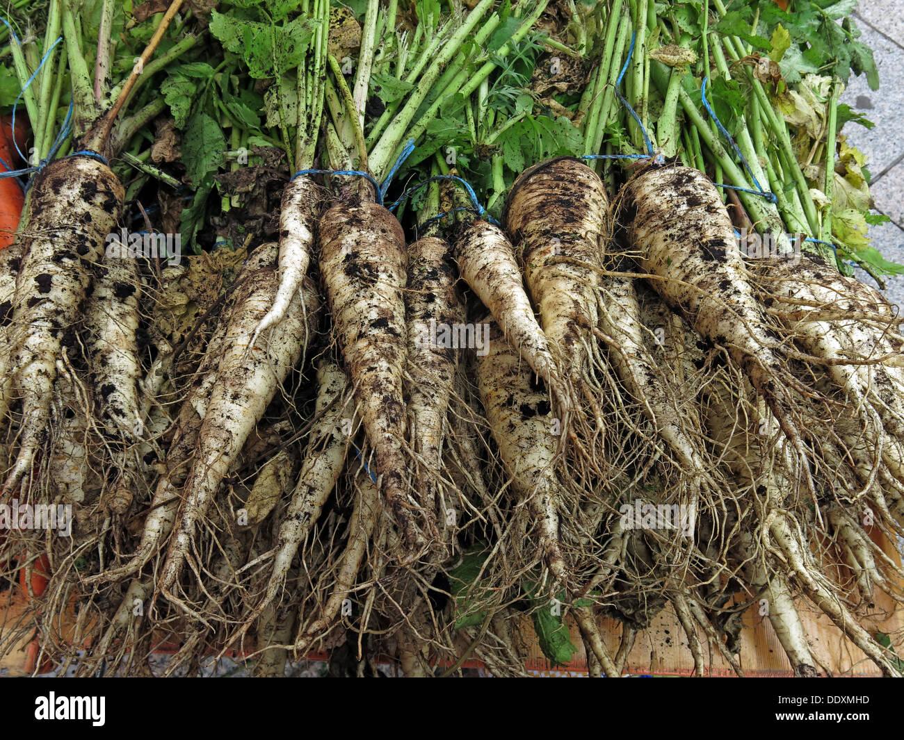 Dirty Organic Parsnips on sale at Farmers Market, Warrington, Cheshire, England, UK - Stock Image