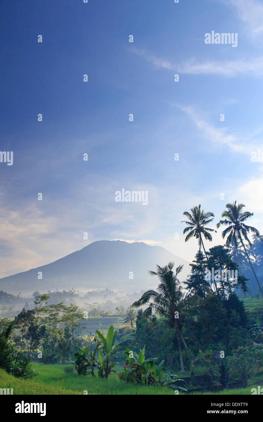 Indonesia, Bali, Sidemen Valley, Rice Fields and Gunung Agung Volcano - Stock Image