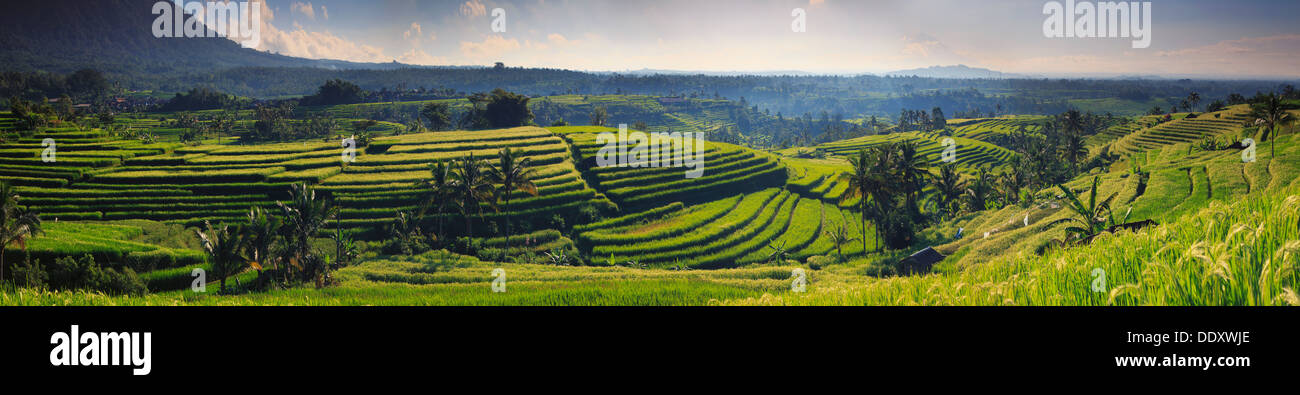 Indonesia, Bali, Central Mountains, Jatiluwih Rice Fields (UNESCO Site) - Stock Image
