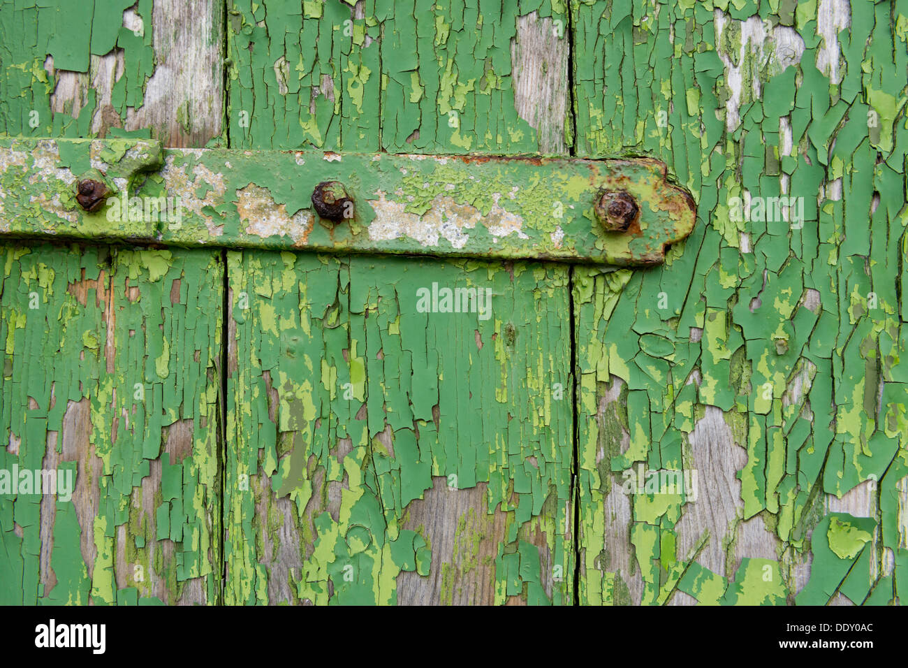 Peeling green paint on wooden boards and a hinge - Stock Image