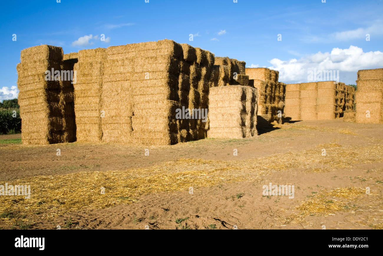 Stacked rectangular straw bales - Stock Image