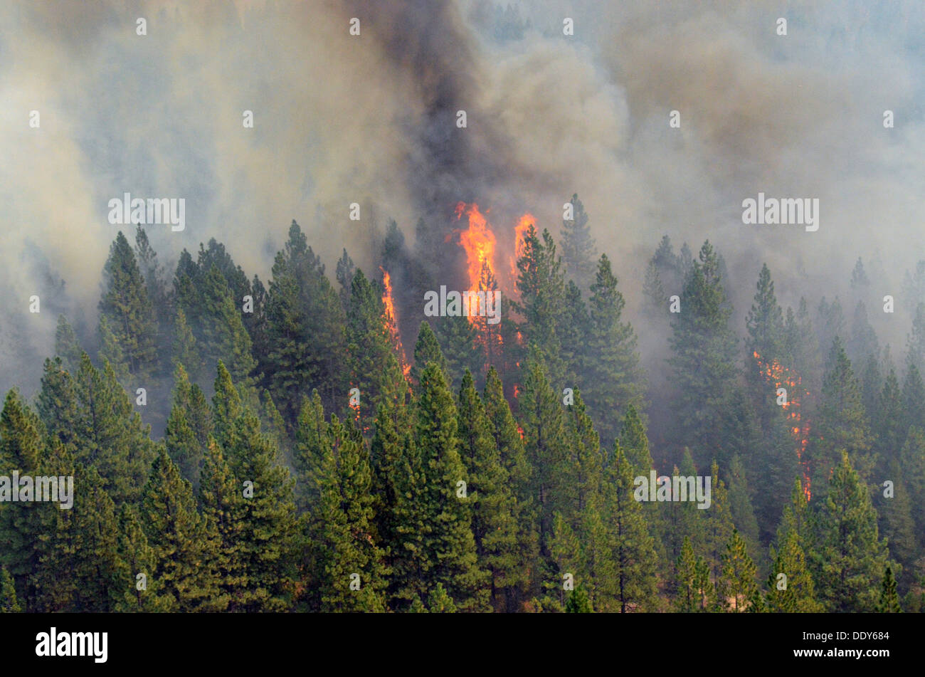 Flames and smoke from the Rim Fire continues to burn forest August 29, 2013 near Yosemite, CA. - Stock Image