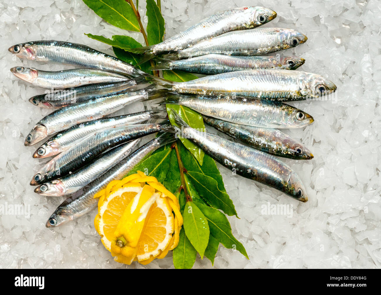 Fresh Sardines and Anchovies on ice. Stock Photo
