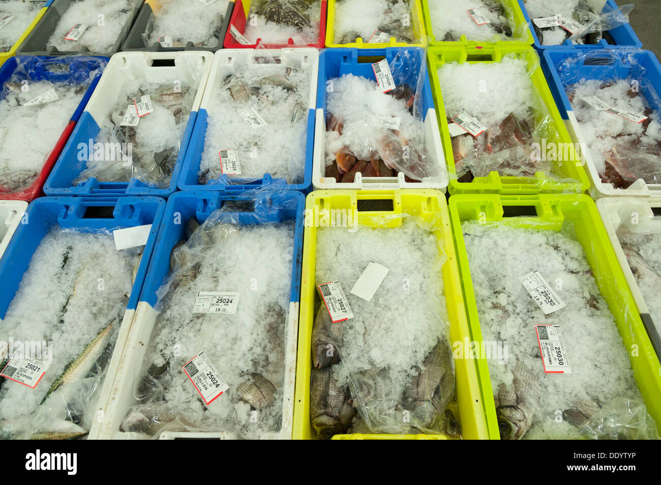 Boxes of fish at fish market and auction or Crier at Concarneau Brittany France - Stock Image