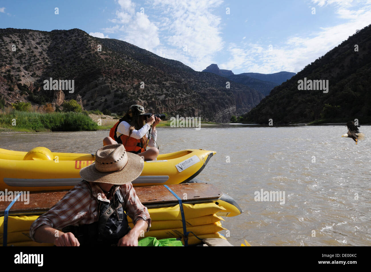 Young girl taking photo of bald headed eagle diving for fish while rafting the Green River in Dinosaur National Monument,  Utah - Stock Image