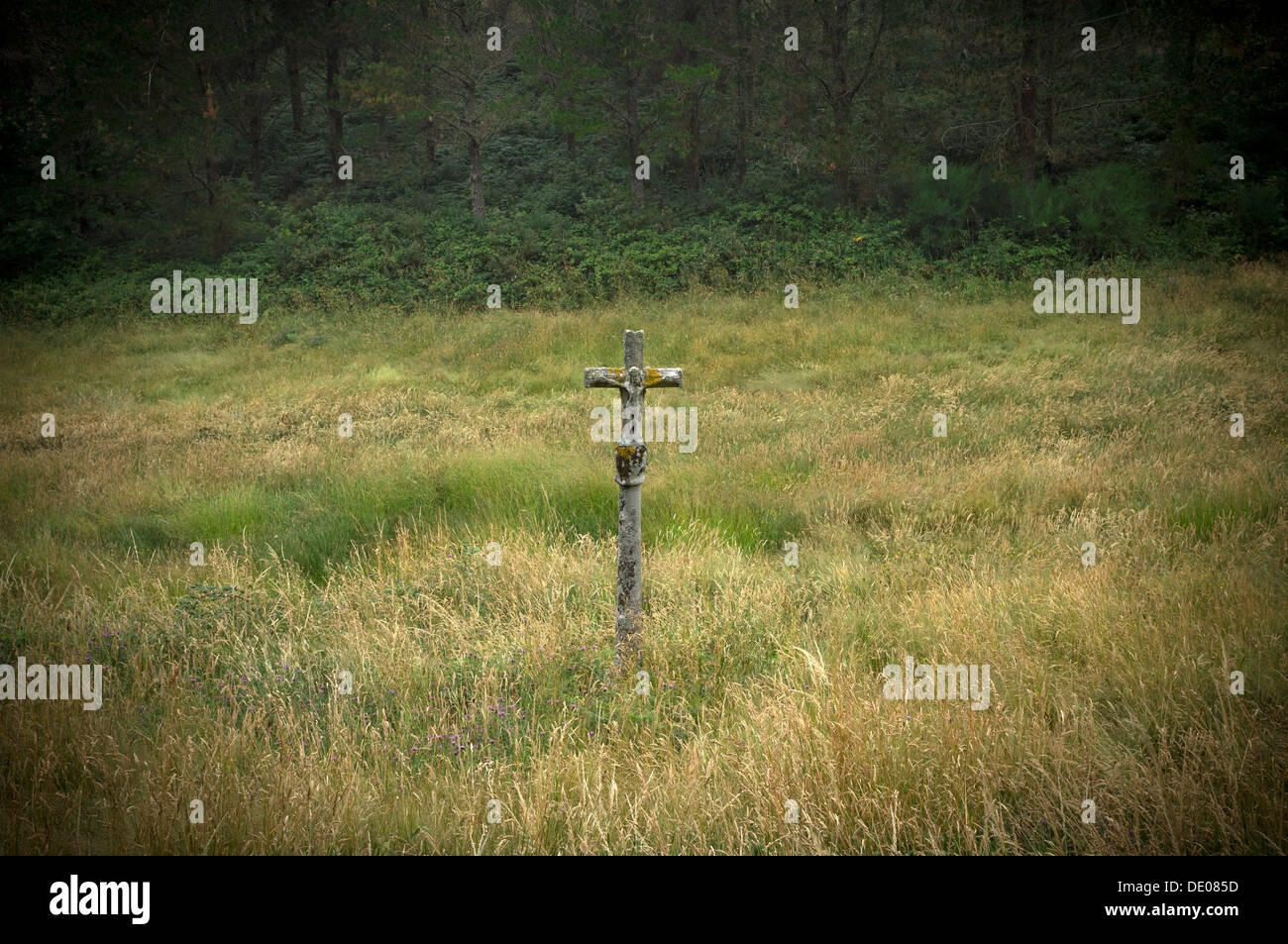 A stone cross hidden among the vegetation in the Way of St. Jame near Cee. - Stock Image
