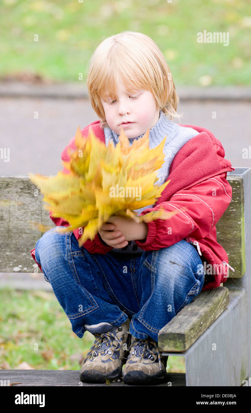 A little boy collecting autumn leaves in a bunch Stock Photo