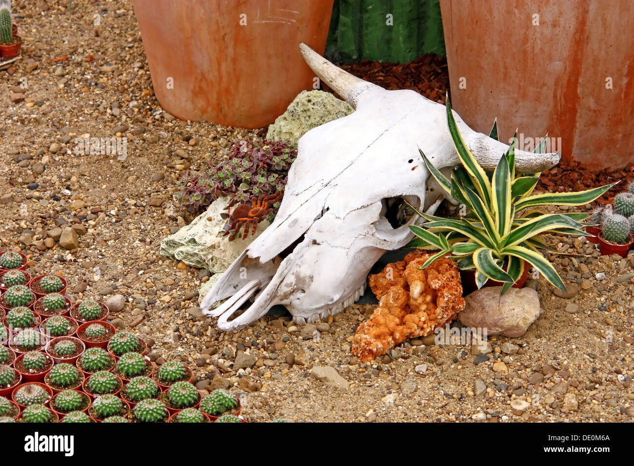Cow skull as a decorative element in the garden Stock Photo