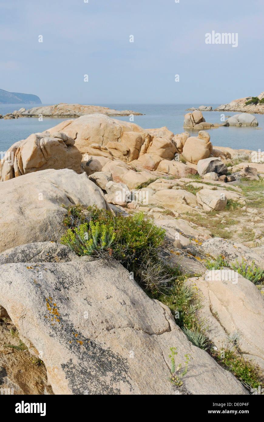 Mediterranean vegetation growing in granite rock crevices at the coast near Olbia, Sardinia, Italy, Europe Stock Photo