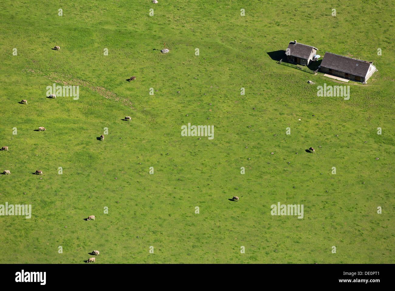 View of the Seealp on Lake Seealpsee, cows, Appenzell, Alpstein, Switzerland, Europe Stock Photo