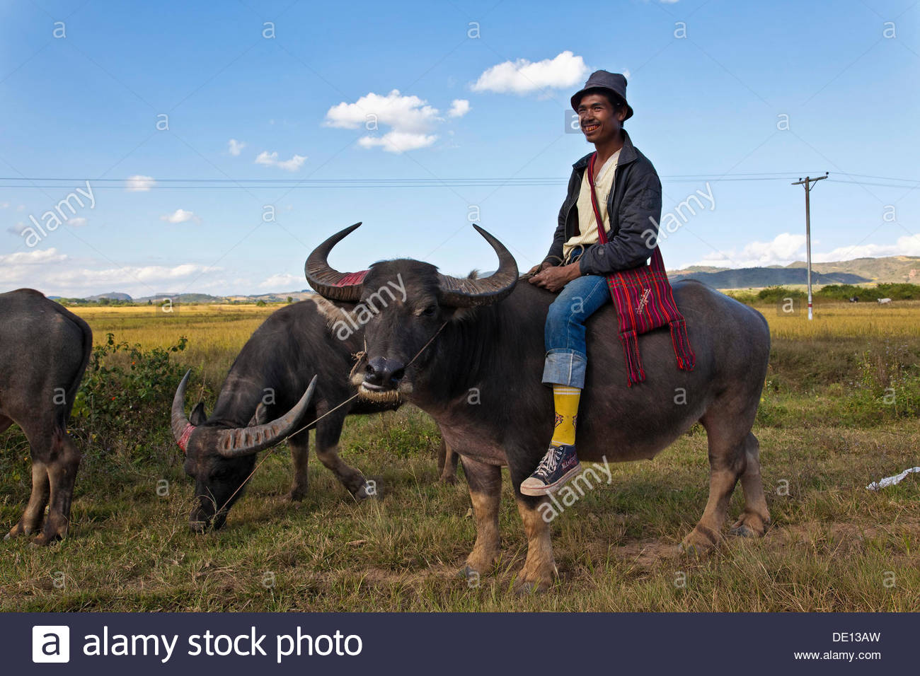 Man with a buffalo