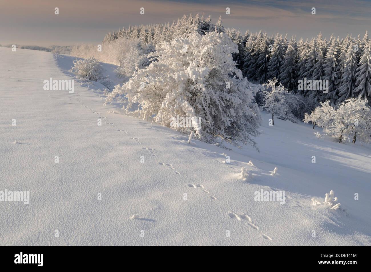 Winter in the Biosphaerengebiet Schwaebische Alb biosphere reserve, Swabian Alb, Baden-Wuerttemberg - Stock Image