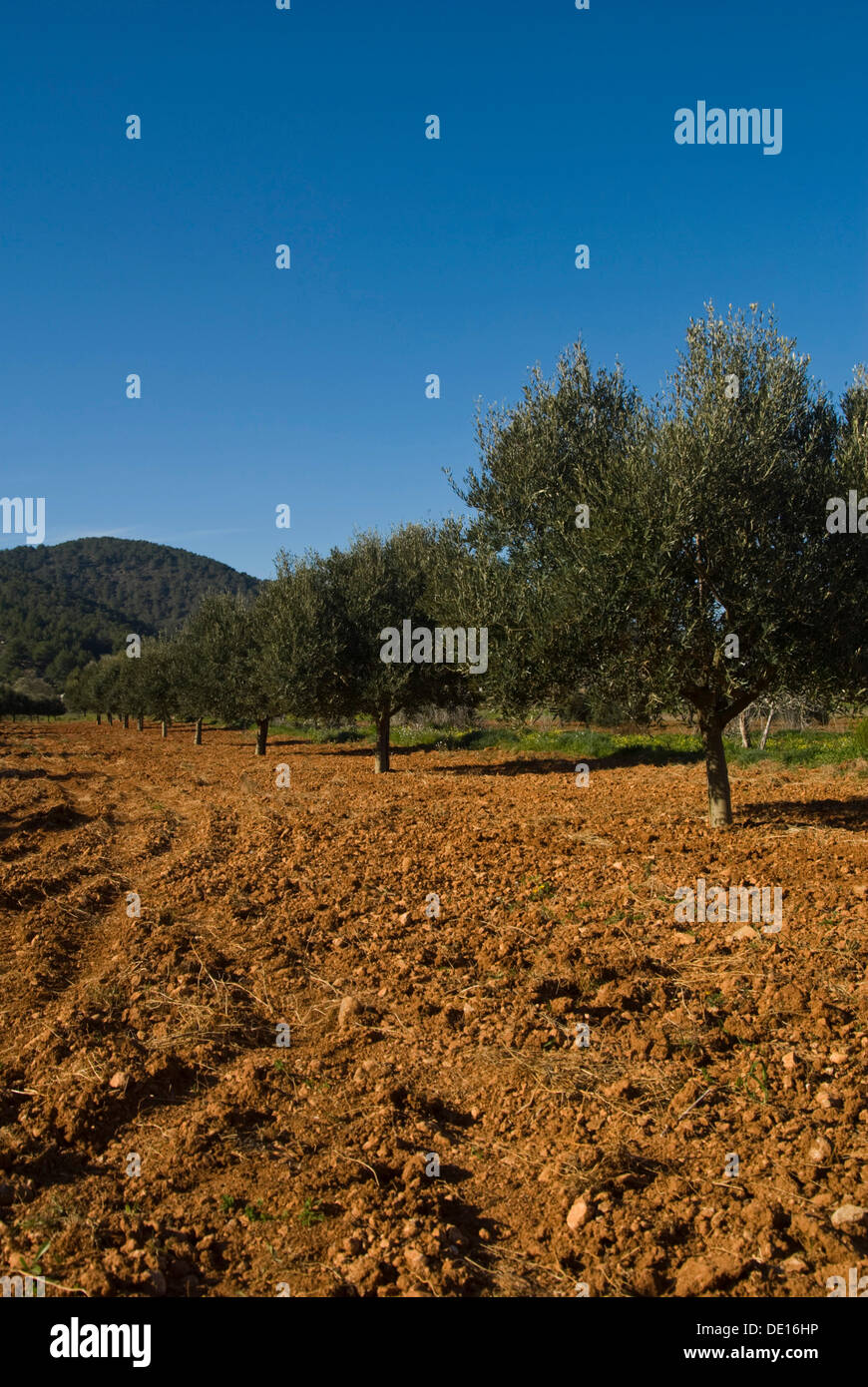 Grove In Agricultural Area Stock Photos & Grove In Agricultural Area ...