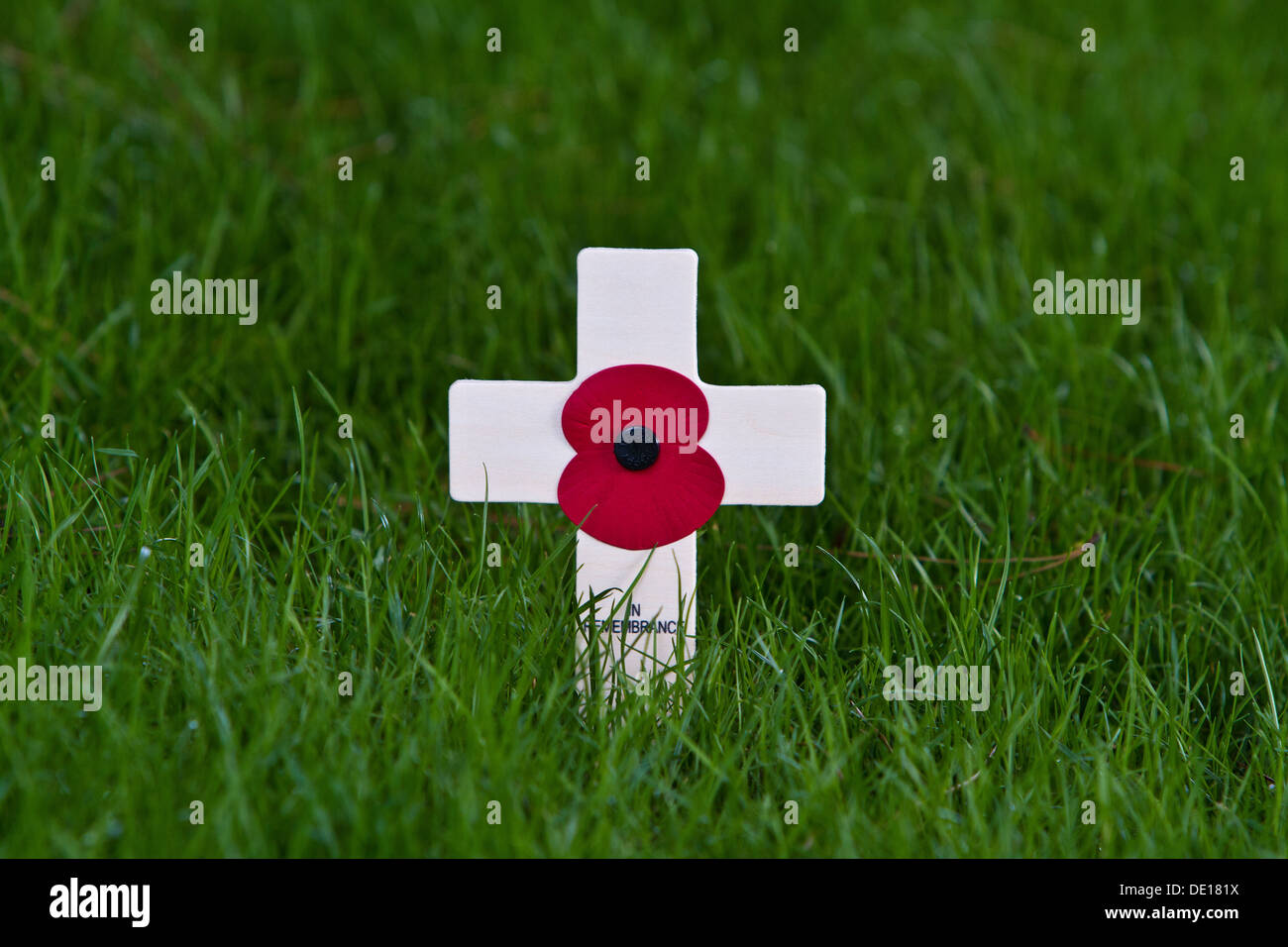 Remembrance Day poppy - Stock Image