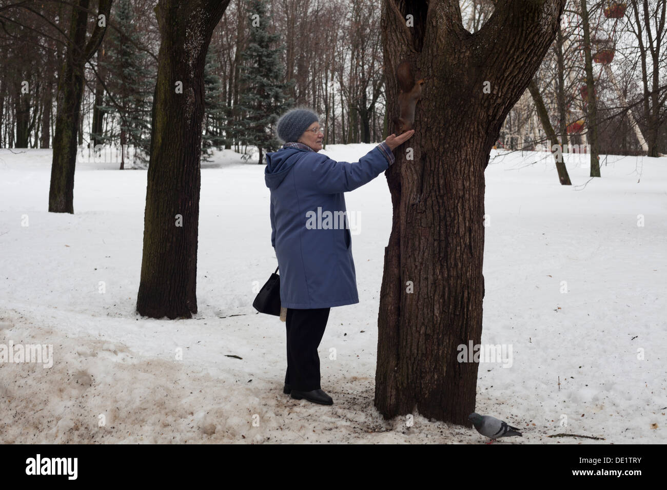 an old lady feeds a squirrel in Minsk - Stock Image