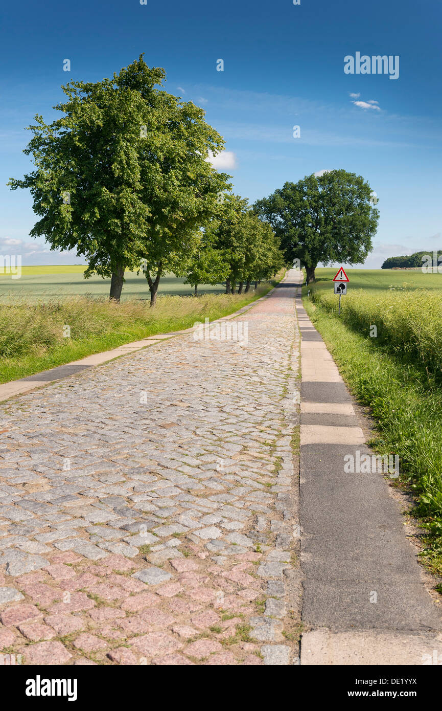 Country road with cobblestones, near Teterow, Mecklenburg-Western Pomerania, Germany - Stock Image
