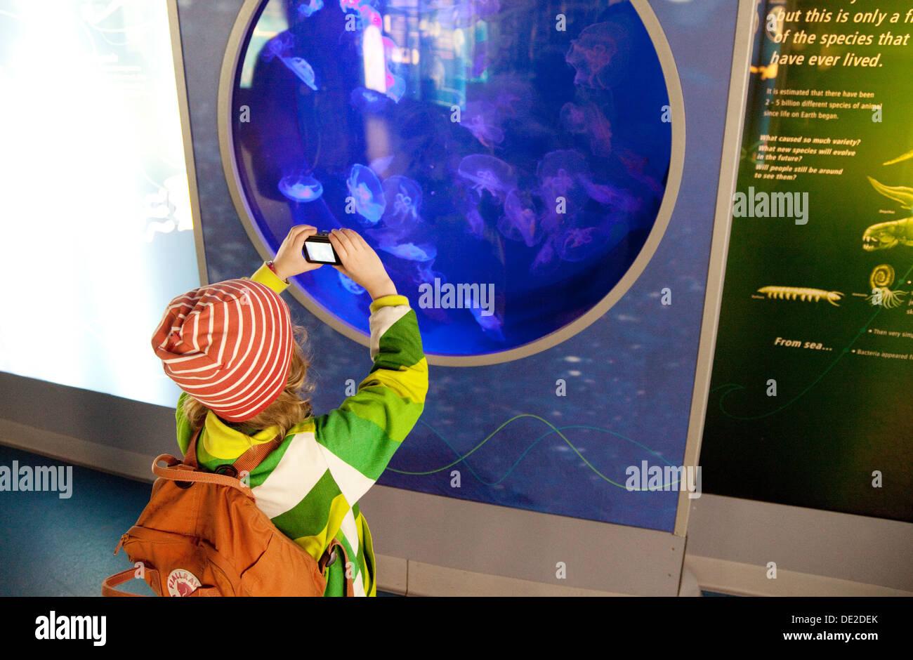 A child taking a photo of jellyfish, London zoo aquarium, London UK - Stock Image