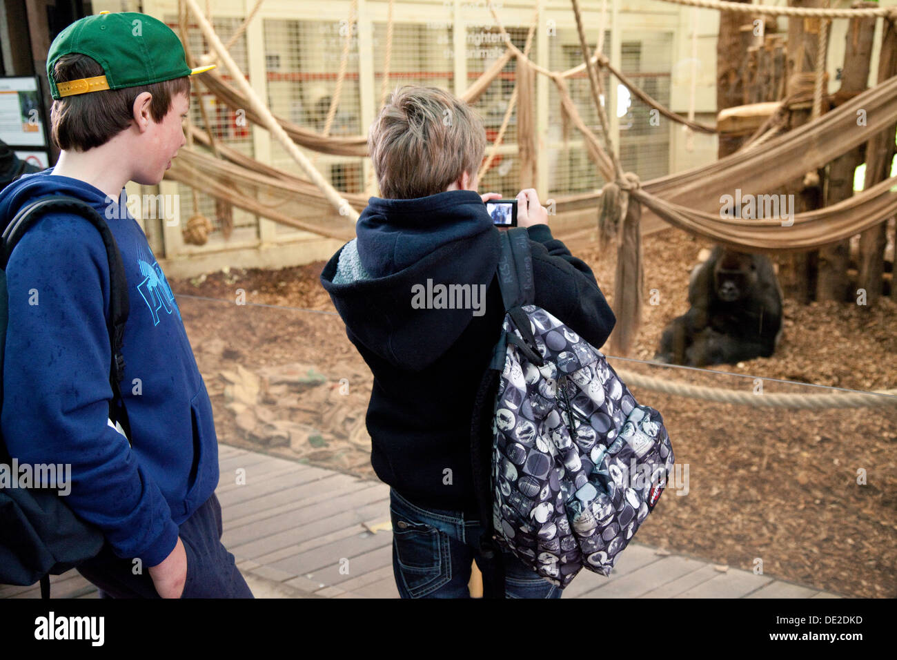 London Zoo, two children looking at a gorilla, London Zoo, Regents Park, England UK Stock Photo