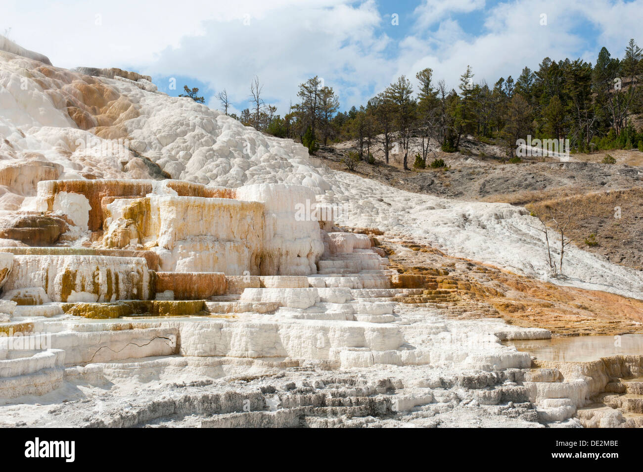 Geomorphology, white and yellow limestone sinter terraces, Palette Spring, Mammoth Hot Springs, Yellowstone National Park - Stock Image