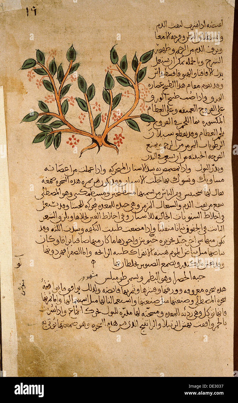 mastic muslim Granada and served as a delicatessen in the court of the caliphs, the islamic  rulers of arabic  it consists mainly of milk, cream, salep, mastic gum and sugar.