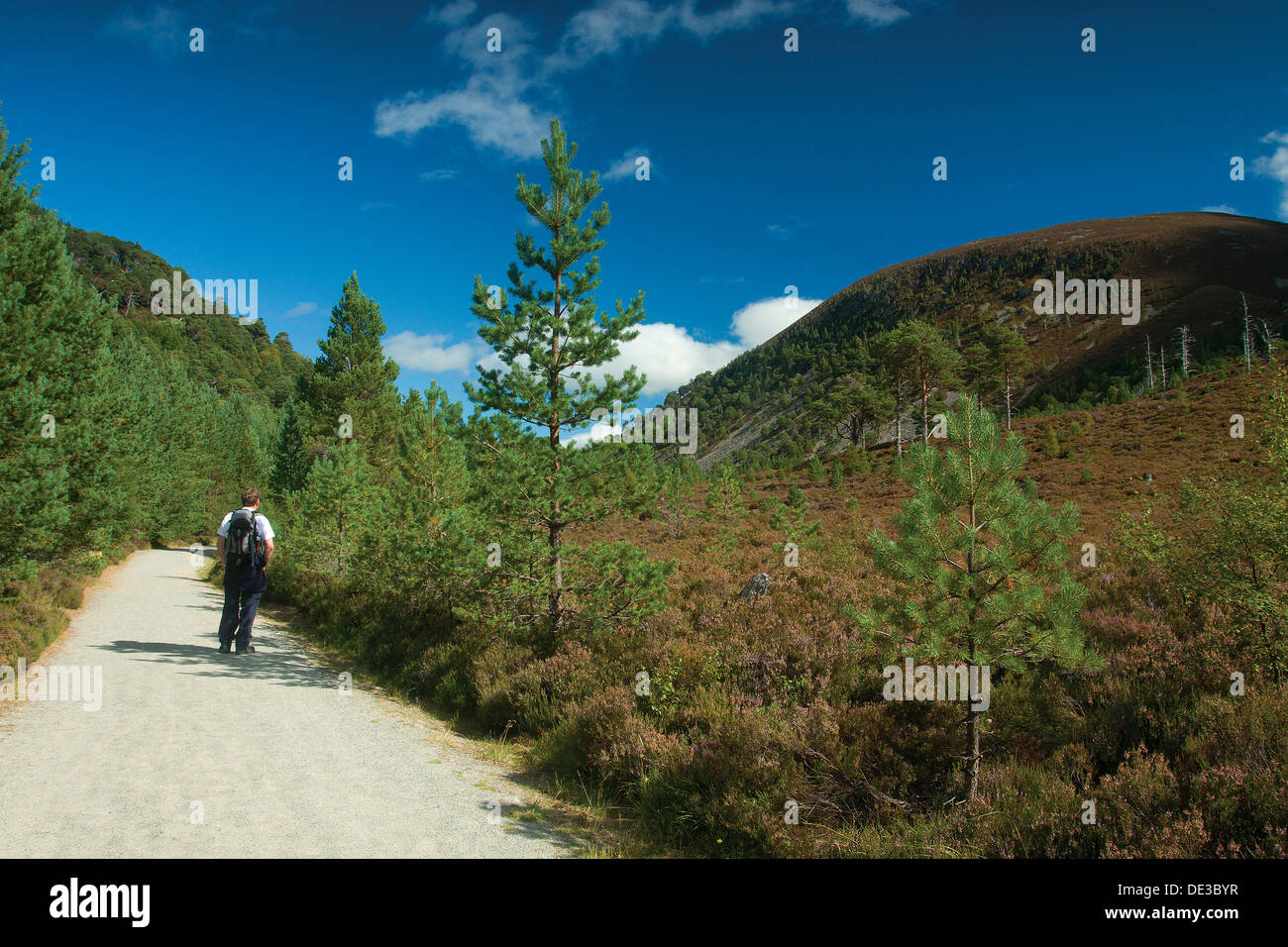 Creag nan Gall from The Thieves Road, The Cateran's Trail, Glen More, Cairngorm National Park - Stock Image