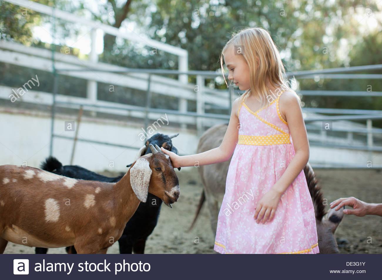 Girl petting goat - Stock Image