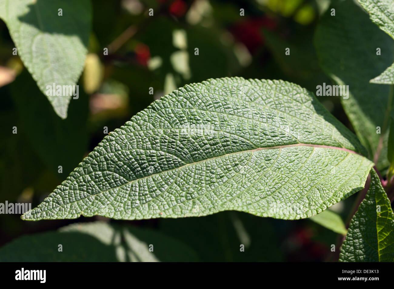 Textured  leaf patterns. - Stock Image