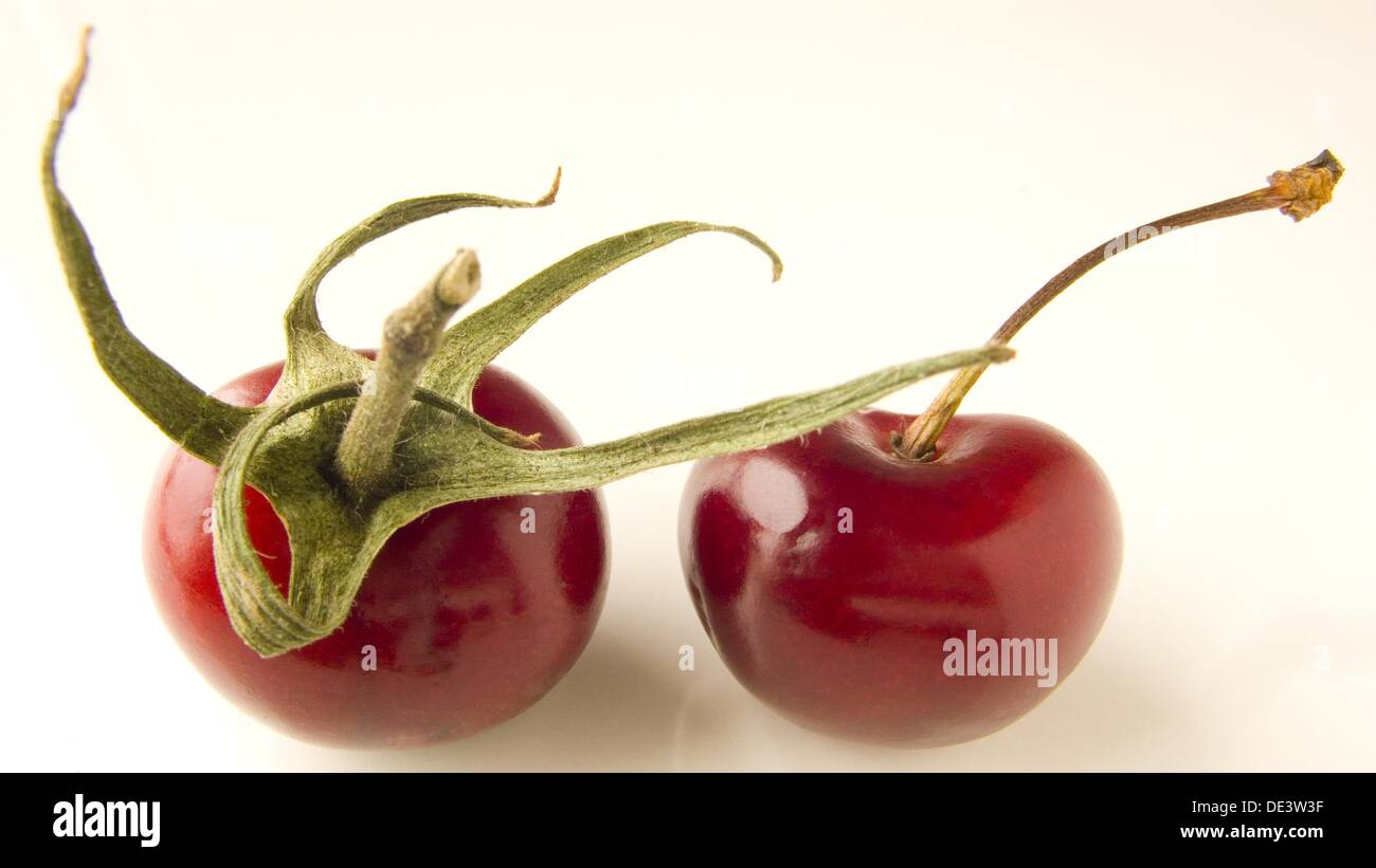 stem, stems, - Stock Image