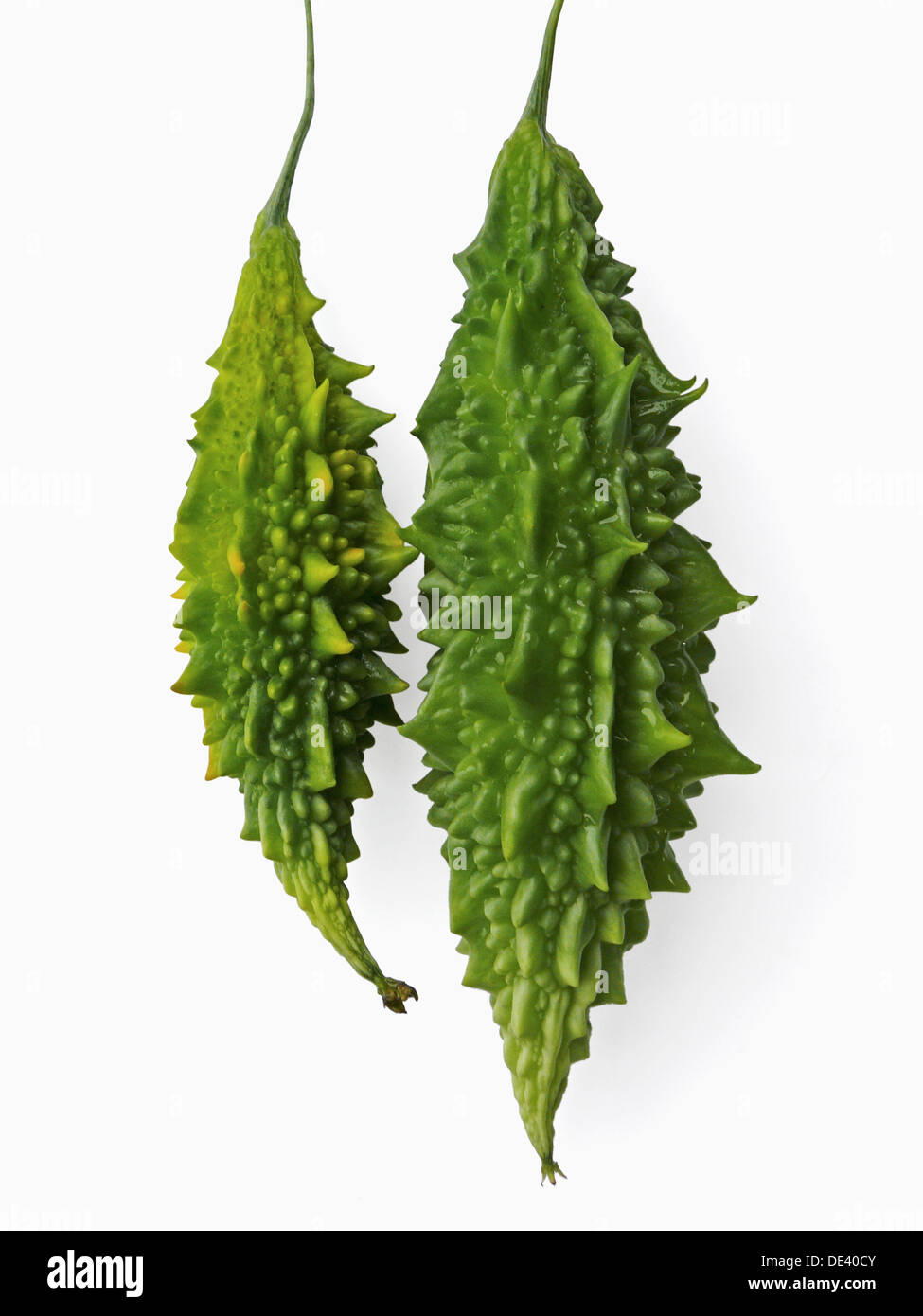 Bitter Melon (known also as: Karela, Bitter Gourd, Balsam Pear, Balsam apple, squirting cucumber) Latin name: Momordica - Stock Image