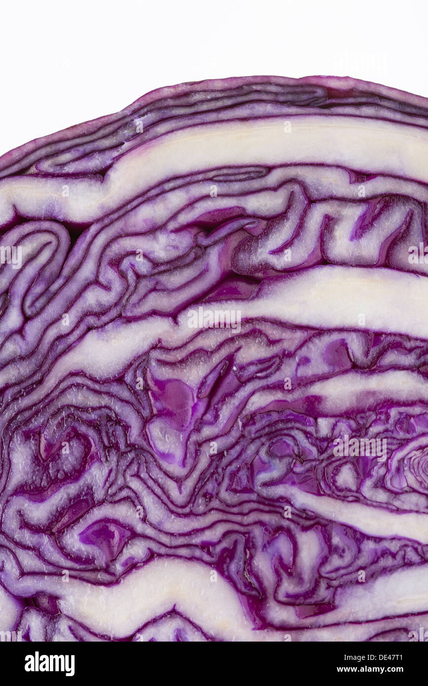 A macro close up of a nutritious, healthy, tasty and appetizing red cabbage sliced in half - Stock Image