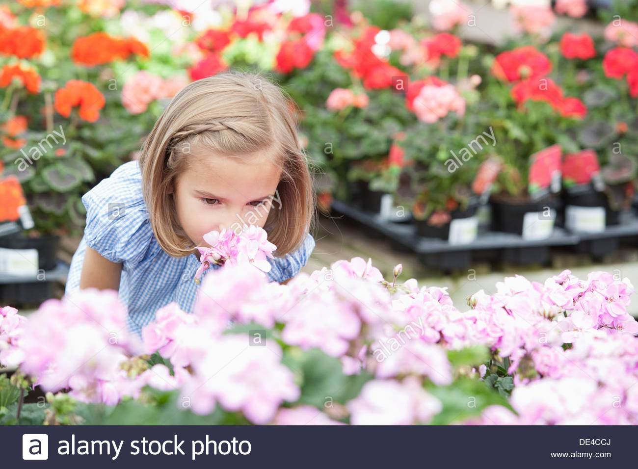 Girl smelling flowers at nursery Stock Photo
